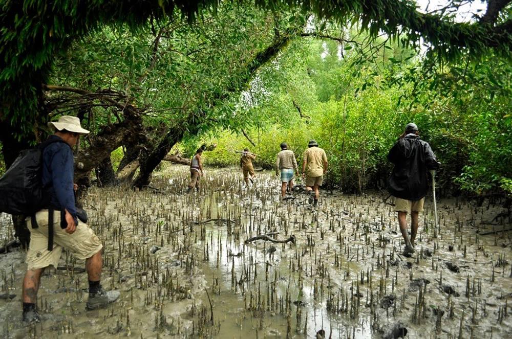 La più grande foresta di mangrovie del mondo sul delta del fiume Gange
