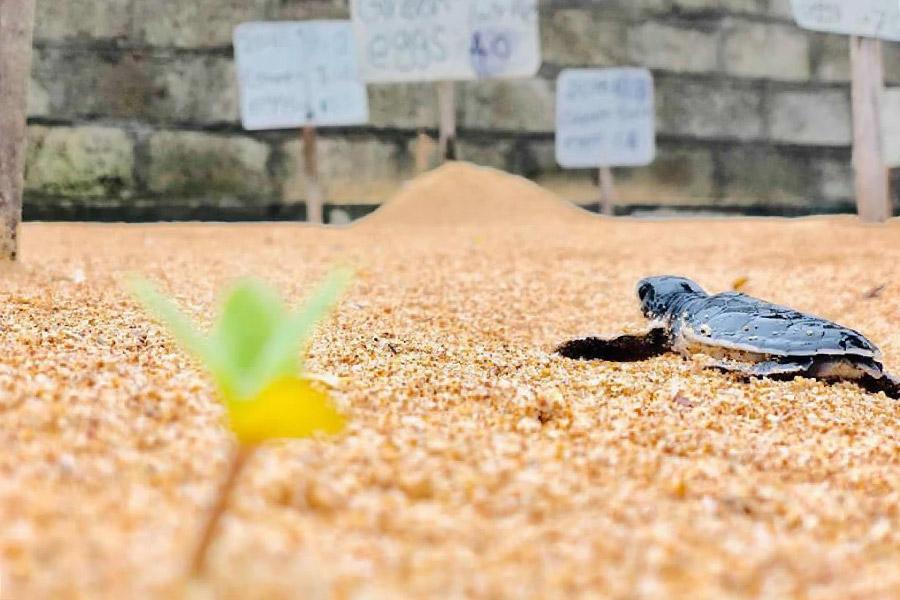conservazione delle tartarughe